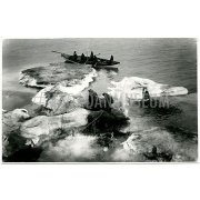 Фотография. Разделка моржей