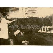 Фотография. Уход за коровами
